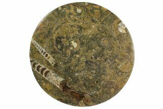 "Buy 11"" Fossil Orthoceras & Goniatite Round Plate - Stoneware - #139498"