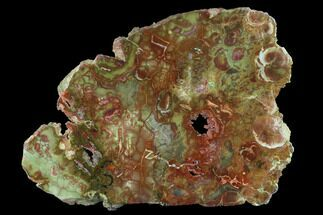 Rhyolite - Fossils For Sale - #141129