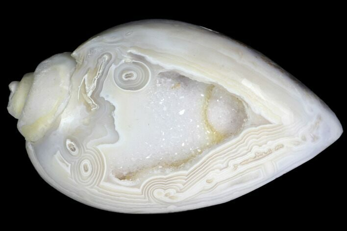 "1.75"" Chalcedony Replaced Gastropod With Druzy Quartz - India"