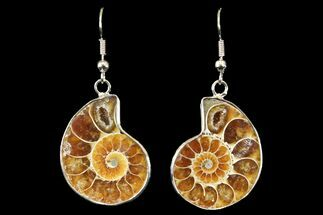 Buy Fossil Ammonite Earrings - 110 Million Years Old - #142870