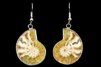 Fossil Ammonite Earrings - 110 Million Years Old For Sale, #142874