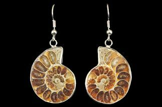 Buy Fossil Ammonite Earrings - 110 Million Years Old - #142876