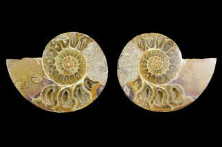 "Buy 4.4"" Cut & Polished Agatized Ammonite Fossil (Pair)- Jurassic - #131740"