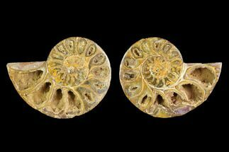 "3.6"" Cut & Polished Agatized Ammonite Fossil (Pair)- Jurassic For Sale, #131669"