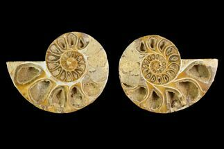 "Buy 3.7"" Cut & Polished Agatized Ammonite Fossil (Pair)- Jurassic - #131671"