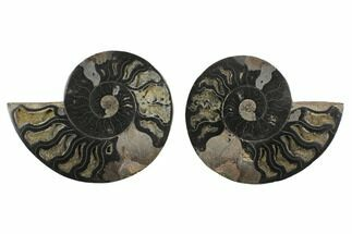 "4.15"" Cut/Polished Ammonite Fossil (Pair) - Unusual Black Color For Sale, #132707"
