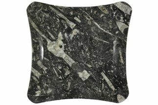 "Buy 11.3"" Fossil Orthoceras & Goniatite Square Plate - Stoneware - #140281"