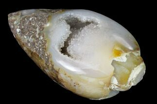 "1.31"" Chalcedony Replaced Gastropod With Druzy Quartz - India For Sale, #143804"