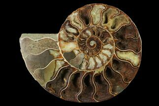Cleoniceras - Fossils For Sale - #144114