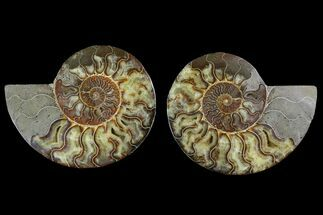 "6.45"" Agatized Ammonite Fossil (Pair) - Agatized For Sale, #144104"