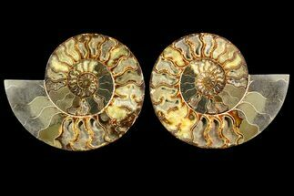 "Buy 10.45"" Agatized Ammonite Fossil (Pair) - Very Large - #145213"