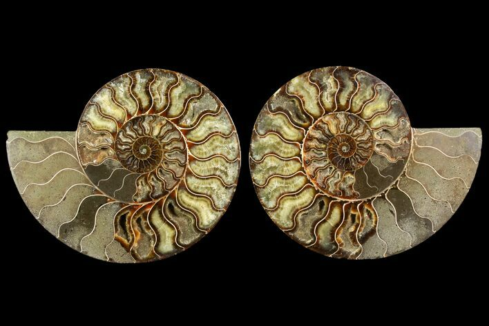 "8.75"" Agatized Ammonite Fossil (Pair) - Madagascar"