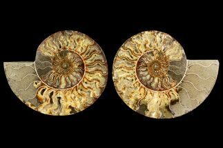"Buy 9"" Agatized Ammonite Fossil (Pair) - Crystal Filled Chambers - #145225"