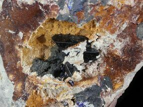 Azurite  - Fossils For Sale - #49452