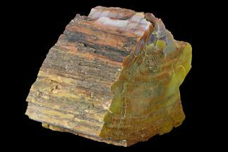 "5.5"" Colorful, Polished Petrified Wood (Araucarioxylon) - Arizona For Sale, #147902"
