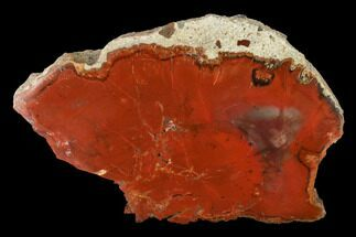 "Buy 5.4"" Brick Red, Polished Petrified Wood (Araucarioxylon) - Arizona - #147910"