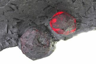"Buy 4.7"" Plate of Two Large Red Embers Garnet in Graphite - Massachusetts - #148168"