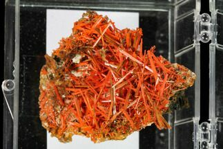 Crocoite - Fossils For Sale - #148509