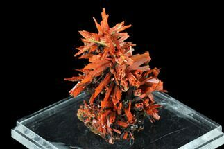 Crocoite - Fossils For Sale - #148527