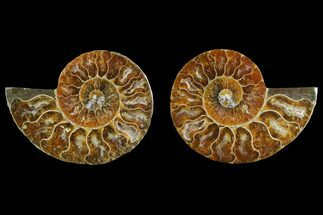 "3"" Agate Replaced Ammonite Fossil (Pair) - Madagascar For Sale, #145832"