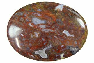"Buy 2"" Colorful, Polished Petrified Palm Root  - Indonesia - #150271"