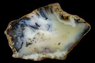 Chalcedony var. Agate - Fossils For Sale - #150525