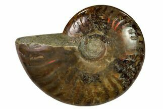 "2.45"" Red Flash Ammonite Fossil - Madagascar For Sale, #151730"