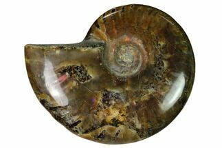 "2.3"" Red Flash Ammonite Fossil - Madagascar For Sale, #151661"