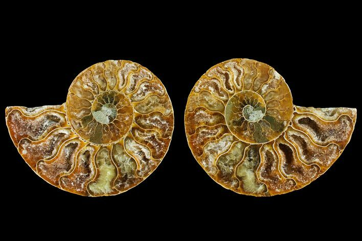 "2.7"" Agatized Ammonite Fossil (Pair) - Crystal Filled Chambers"