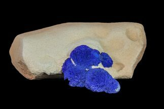 Azurite - Fossils For Sale - #155661