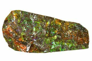 "6.3"" Iridescent Ammolite (Fossil Ammonite Shell) - Alberta, Canada For Sale, #156854"