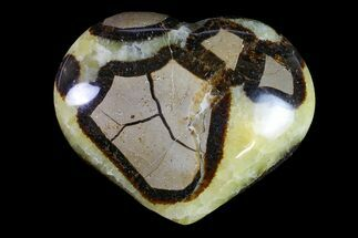 Septarian - Fossils For Sale - #156648