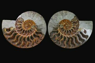 "9.4"" Agatized Ammonite Fossil (Pair) - Crystal Filled Chambers For Sale, #159353"