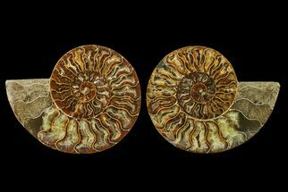 "5.55"" Agate Replaced Ammonite Fossil (Pair) - Madagascar For Sale, #158318"