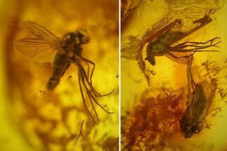Three Fossil Flies (Diptera) In Baltic Amber For Sale, #159782