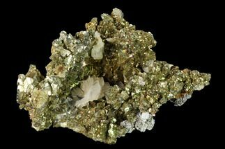 Barite & Chalcopyrite - Fossils For Sale - #160137