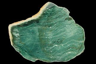 Fuchsite - Fossils For Sale - #160356