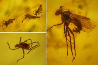 Order Diptera (Fly), Subclass Acari (Mite) & Subclass Collembola (Springtails) - Fossils For Sale - #163509