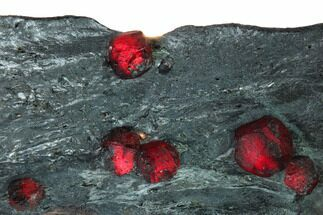 Garnet var. Almandine & Graphite - Fossils For Sale - #165492