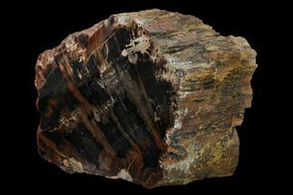 "Buy 4.8"" Red/Black, Polished Petrified Wood (Araucarioxylon) - Arizona - #165982"