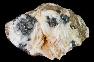 "2.6"" Cerussite Crystals with Bladed Barite on Galena - Morocco For Sale, #165725"