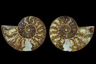 "Buy 4.3"" Agate Replaced Ammonite Fossil (Pair) - Madagascar - #166753"