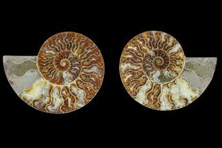 "Buy 5.3"" Agate Replaced Ammonite Fossil (Pair) - Madagascar - #166870"