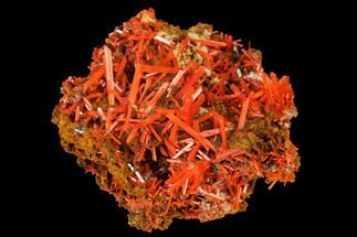 "1.1"" Bright Orange Crocoite Crystal Cluster - Tasmania For Sale, #171641"