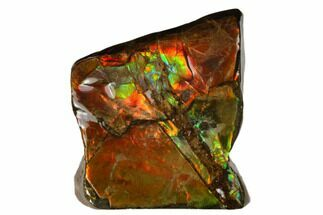 "1.1"" Iridescent Ammolite (Fossil Ammonite Shell) - Alberta, Canada For Sale, #175133"