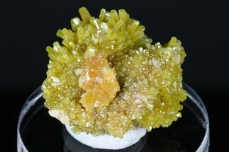 "1.1"" Yellow-Orange Pyromorphite Crystals - Bunker Hill Mine, Idaho For Sale, #175883"