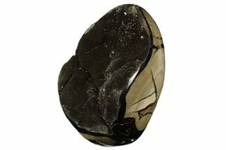 Septarian, Calcite & Barite - Fossils For Sale - #177432