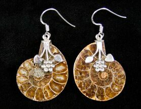 Ammonite Earrings For Sale, #3158