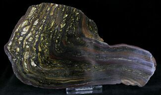Buy Banded Tiger Iron Stromatolite - Pilbara, Australia (2.7 Billion Years) - #22492