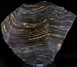 Tiger Iron Stromatolite - Fossils For Sale - #22494